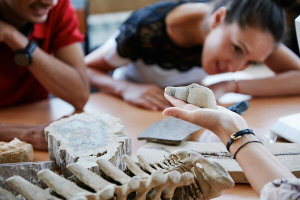 Students examining fossils in palaeontology lab