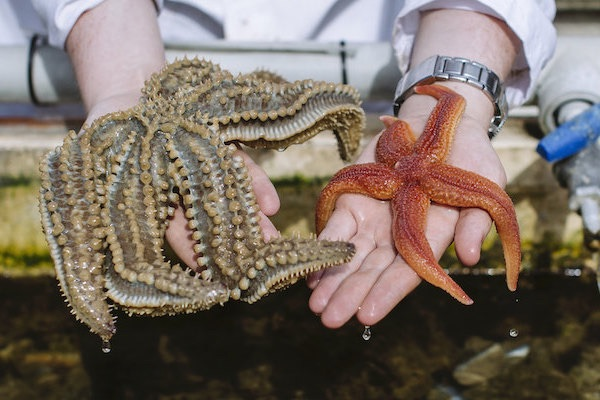 student holding up two starfish