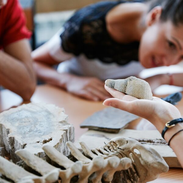 Palaeontology students studying fossils