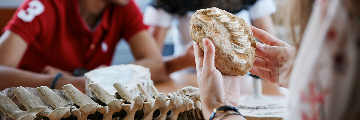 palaeontology student works with fossils