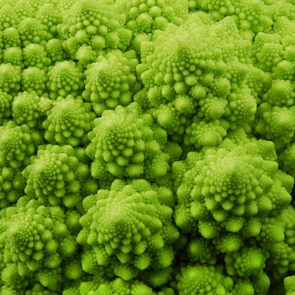 romanesque broccoli macro