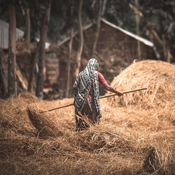 Woman tending to large pile of hay in Asia