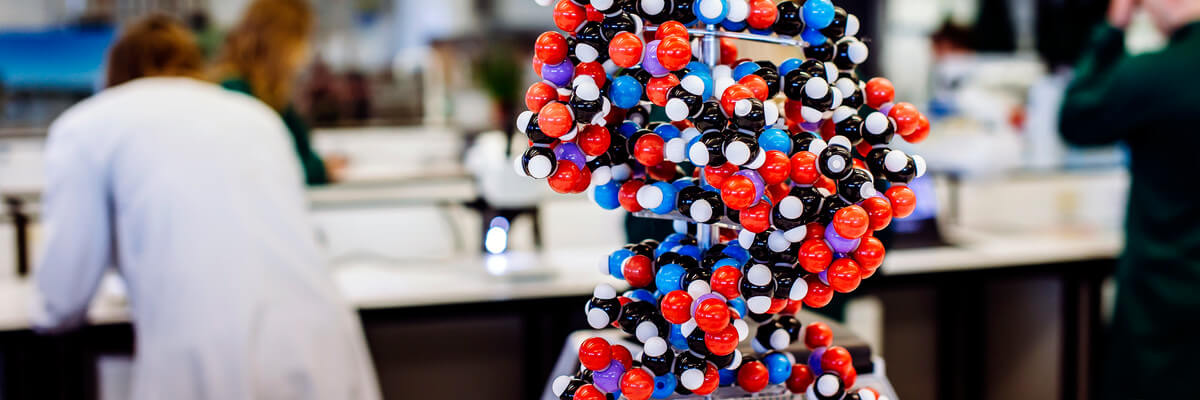 Molecule model for biological science