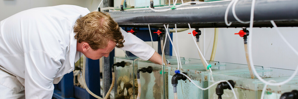 Marine researcher using tank equipment
