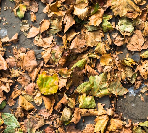 Autumn leaves on ground at University of Portsmouth