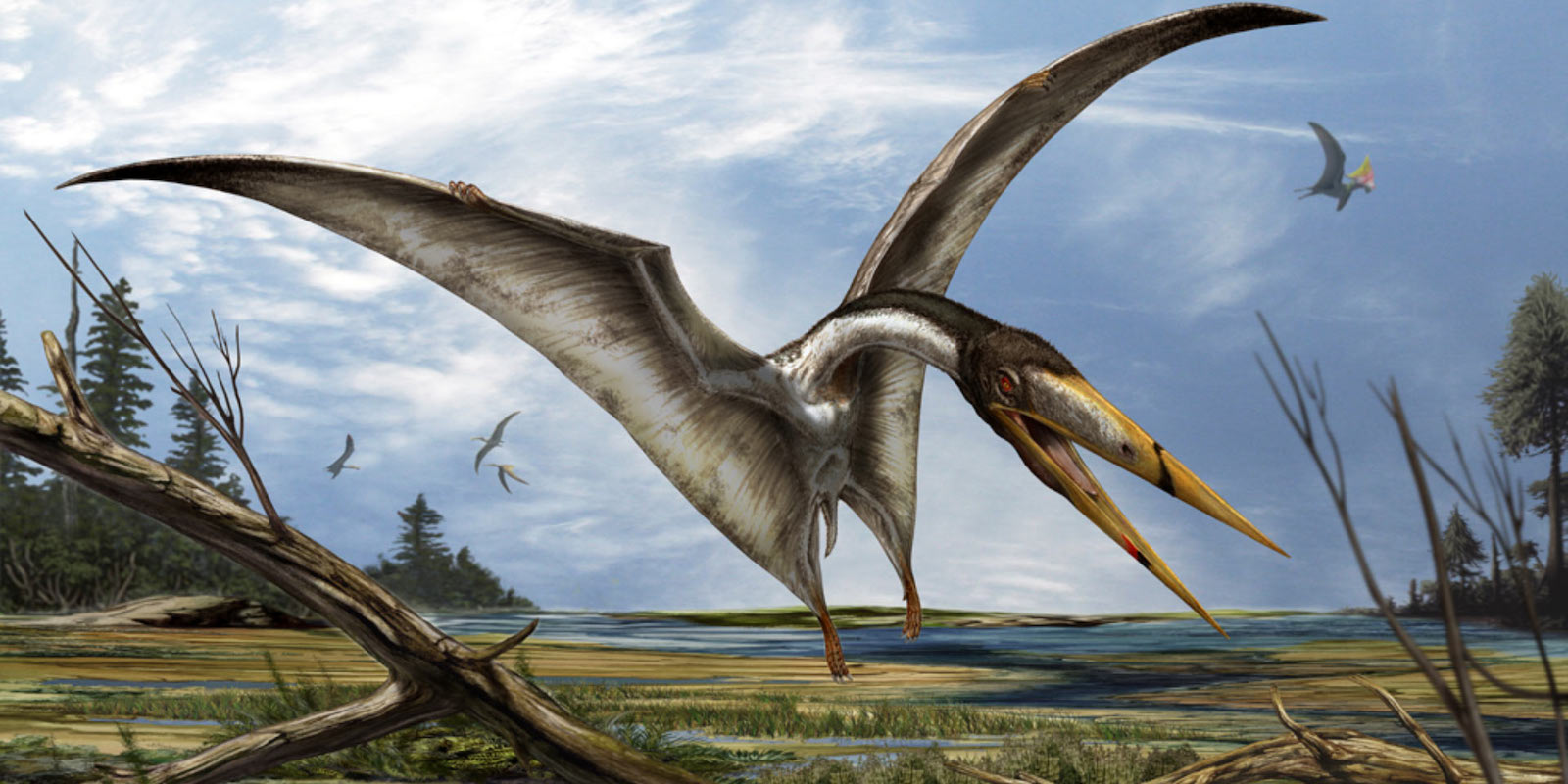 Pterosaur artist impression by David Bonnadona