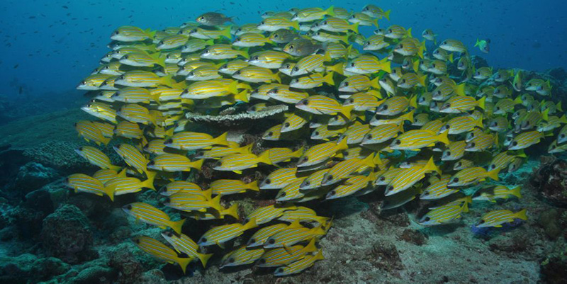 Shoal of fish in the sea
