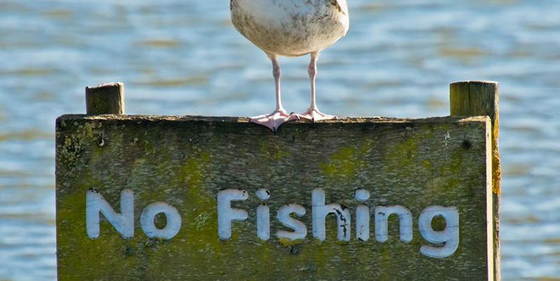 "Seagull standing on sign that reads ""no fishing"""