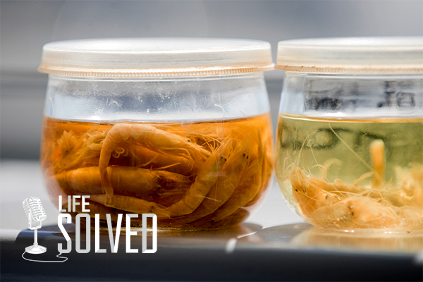 Two jars containing sea creatures in murky water, life solved logo in corner