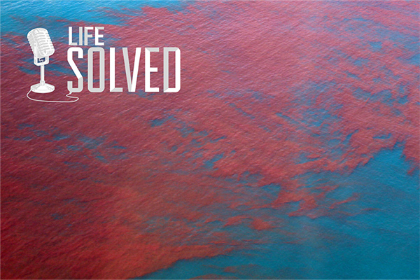 Algal blooms that are red against the blue ocean. Life Solved logo