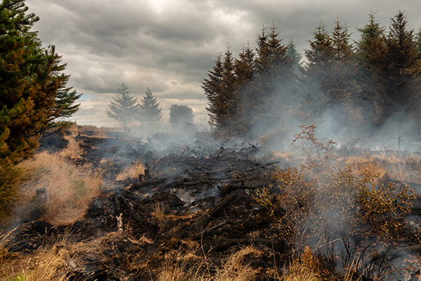 Smoke rising from a grassland wildfire next to a forest