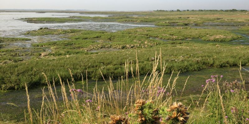 Salt marsh in Chichester Harbour
