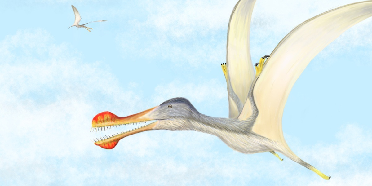 researchers at portsmouth discover three new species of flying reptile