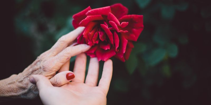 Holding rose between hands